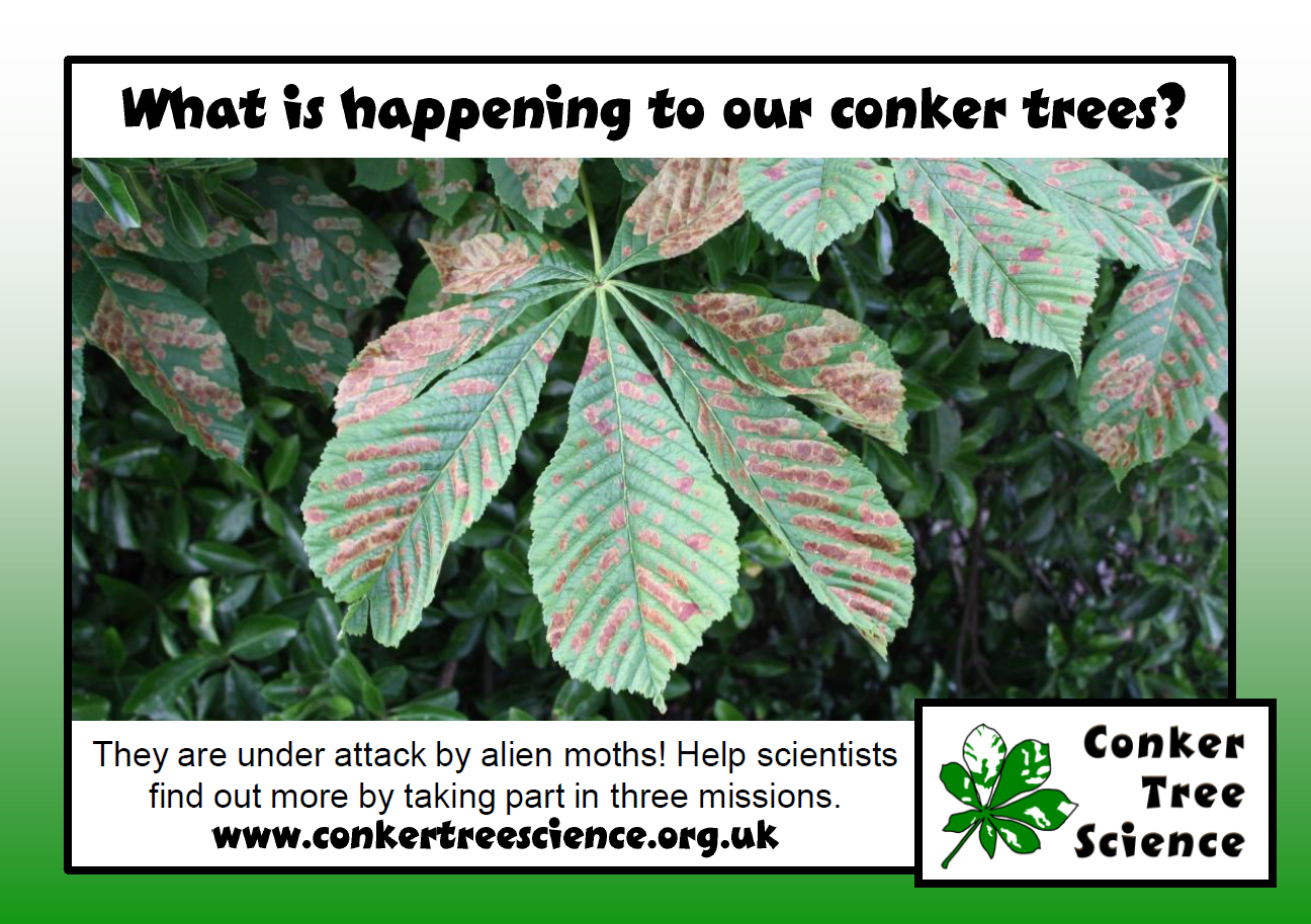 Image from conker tree science project