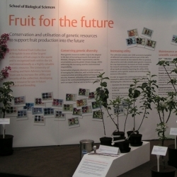 The National Fruit Collection stand at The Chelsea Flower Show